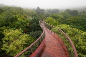 The-Boomslang-canopy-walkway